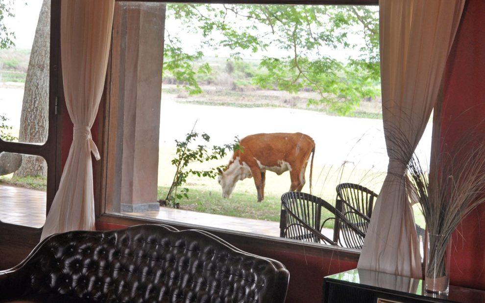 Delta Vista Lodge35