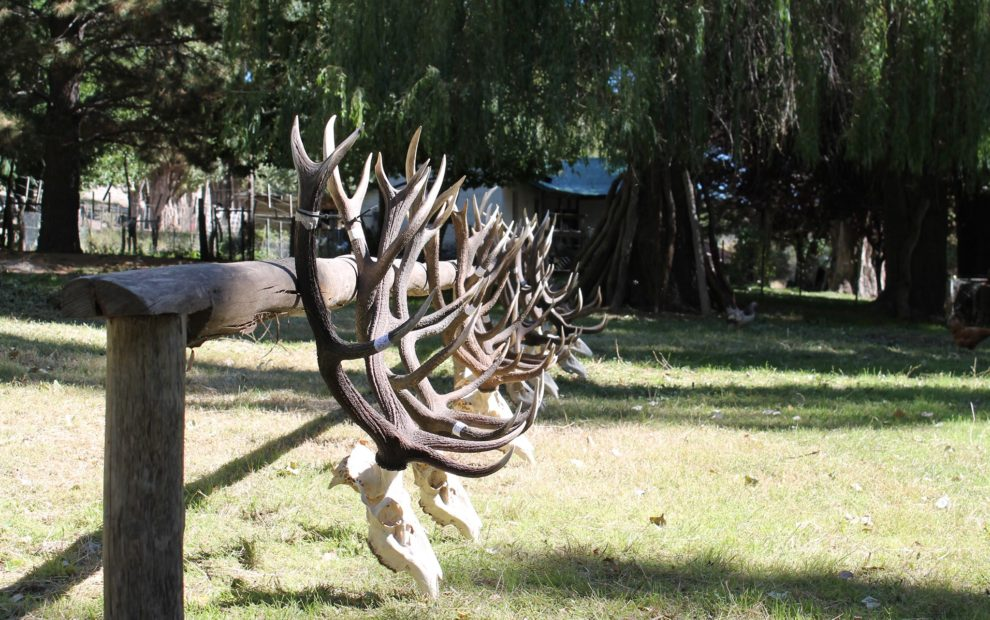 Argentina Red Stag Hunting16