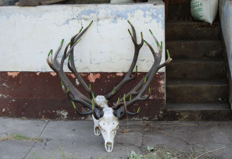 Argentina Red Stag Hunting6