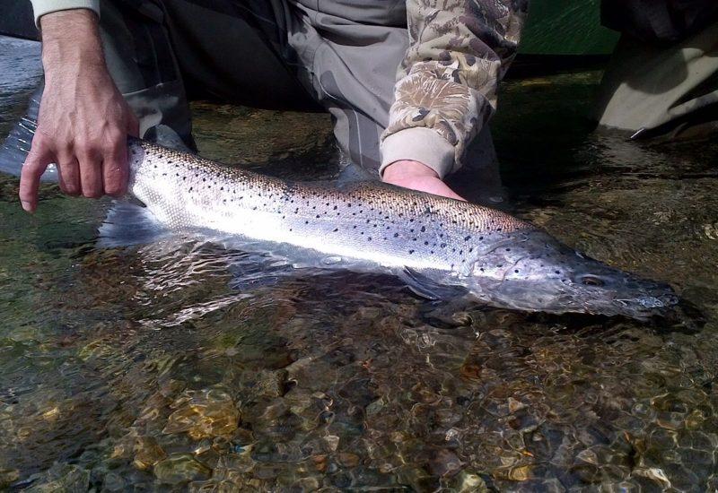 Bariloche Fishing Day Trips22