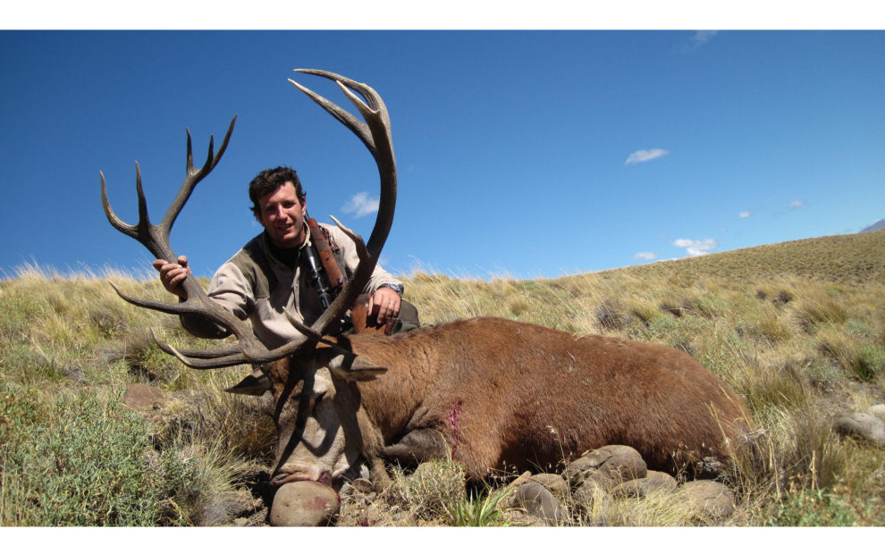 Red Stag hunting 51b