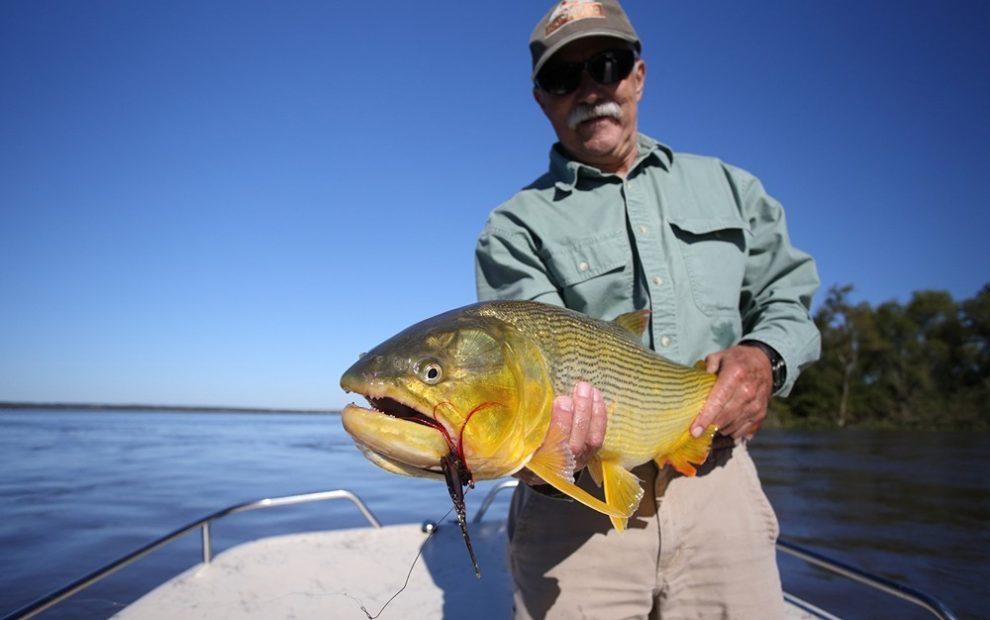 Fly Fisherman (Alan Sands) w/Golden Dorado, Argentina/Uruguay by GaryKramer.net, 530-934-3873, gkramer@cwo.com