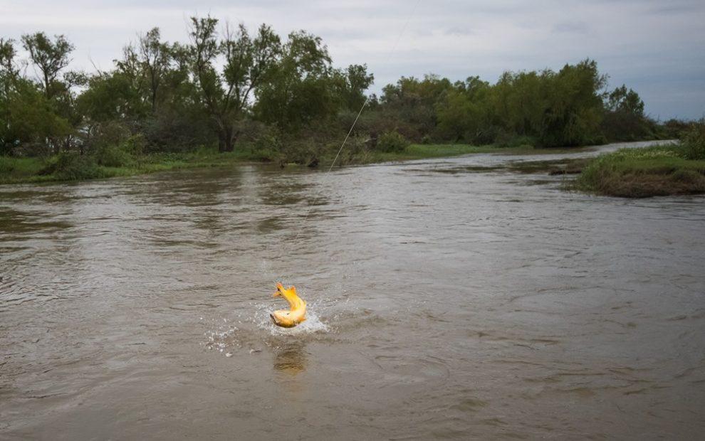 Los Laureles Golden Dorado Fishing5